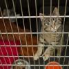 Aresztowano mieszkańca regionu znęcającego się nad kotem