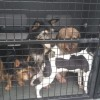 Bydgoszczanka znęcała się nad zwierzętami. Została zatrzymana