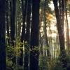 Chroń lasy jeśli chcesz poprawić czystość powietrza w swojej okolicy