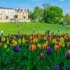 Darmowe fascynujące koncerty muzyki klasycznej w Ostromecku