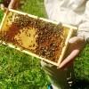 Dzień pszczół w Ogrodzie Botanicznym