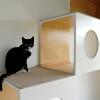 Holenderskie badanie: Koronawirus roznosi się wśród domowych kotów i psów