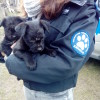Interwencja w sprawie bezpańskich psów pod Bydgoszczą