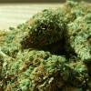 Marihuanę przechowywał na tylnym siedzeniu auta