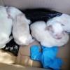 Mieszkanka podnakielskiej wsi wyrzuciła szczeniaki do śmietnika