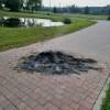 Myślęcinek apeluje: Nie rozpalajmy ognisk na terenie parku oraz na ścieżkach!…