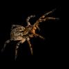 Niezwykła wystawa pająków i skorpionów w bydgoskim centrum handlowym