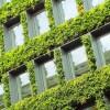 Pionowe ogrody na miejskich budynkach