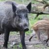 Pomóż zwierzętom z ZOO w Myślęcinku! Włącz się do akcji zbierania żołędzi