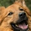 """""""Ratuj!"""". Pomóż zwierzakom z bydgoskiego schroniska w walce z kleszczami"""