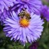 W sobotę Dzień Pszczół w bydgoskim centrum handlowym