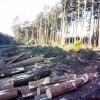 Wycinają drzewa pod S5