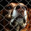Zobacz, jak pracuje bydgoskie Schronisko dla Zwierząt i zdecyduj się na adopcję!