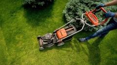 4 wskazówki dotyczące zdrowego trawnika
