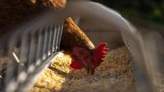 Kolejny przypadek ptasiej grypy województwie kujawsko-pomorskim