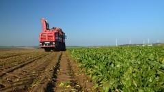 Krajowa Spółka Cukrowa podsumowuje kampanię cukrowniczą 2020/2021