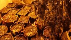 Kujawsko-pomorskie: Marihuanę uprawiał w garażu. Już trafił do aresztu