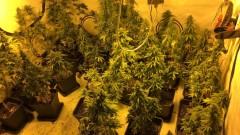 Mieszkaniec regionu marihuanę hodował w mieszkaniu [FOTO]