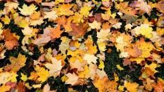 Gorące tematy - Nadchodzi astronomiczna jesień - początek w środę wieczorem