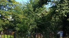 Pomóż stworzyć ogród społeczny przy Gdańskiej 5