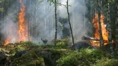 Poszukiwani świadkowie pożaru lasu
