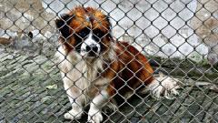 Tragedia pod Bydgoszczą. Znaleziono martwe i głodzone psy w kolejnej pseudohodowli!