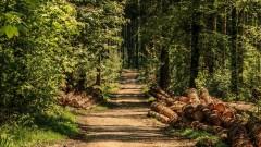 Wsparcie dla właścicieli lasów prywatnych