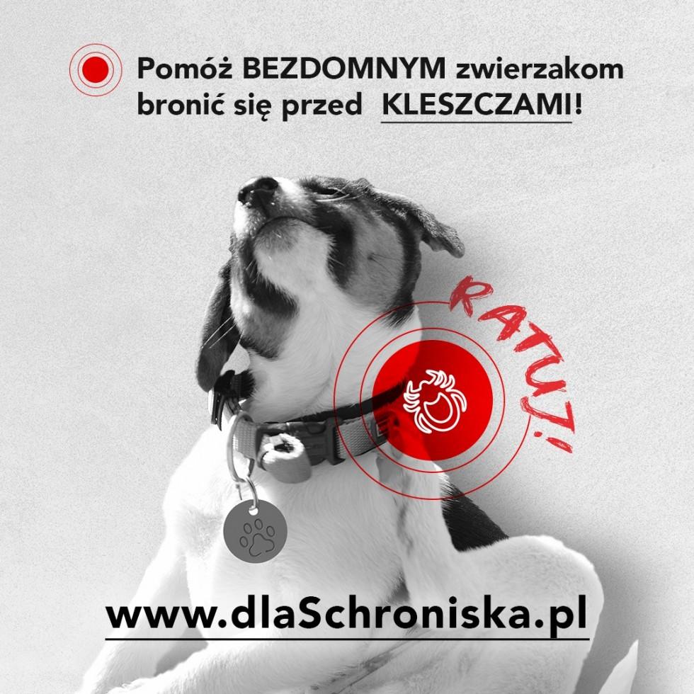 Można dołączyć do zbiórki dla bezdomnych czworonogów z Bydgoszczy i zabezpieczyć je przed kleszczami
