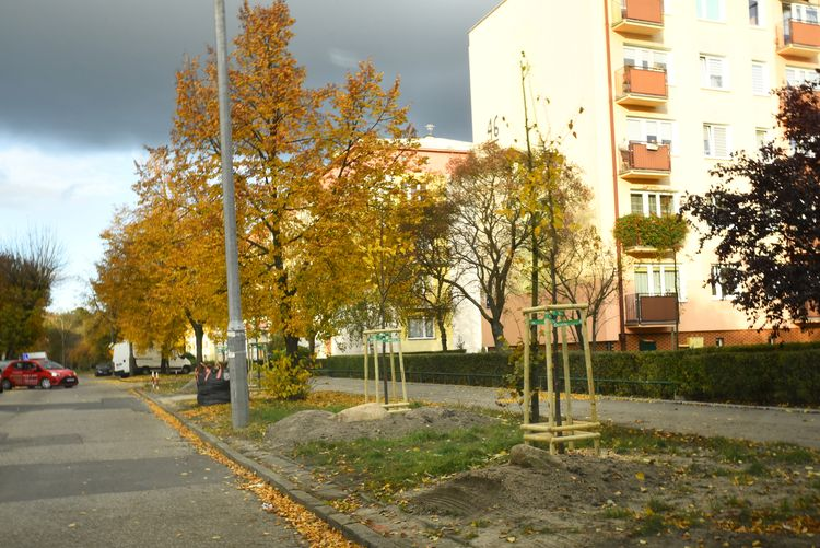 Nowe drzewa i krzewy w Bydgoszczy