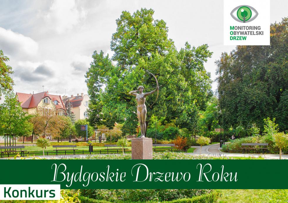 Pomóż wybrać Bydgoskie Drzewo 2021 roku