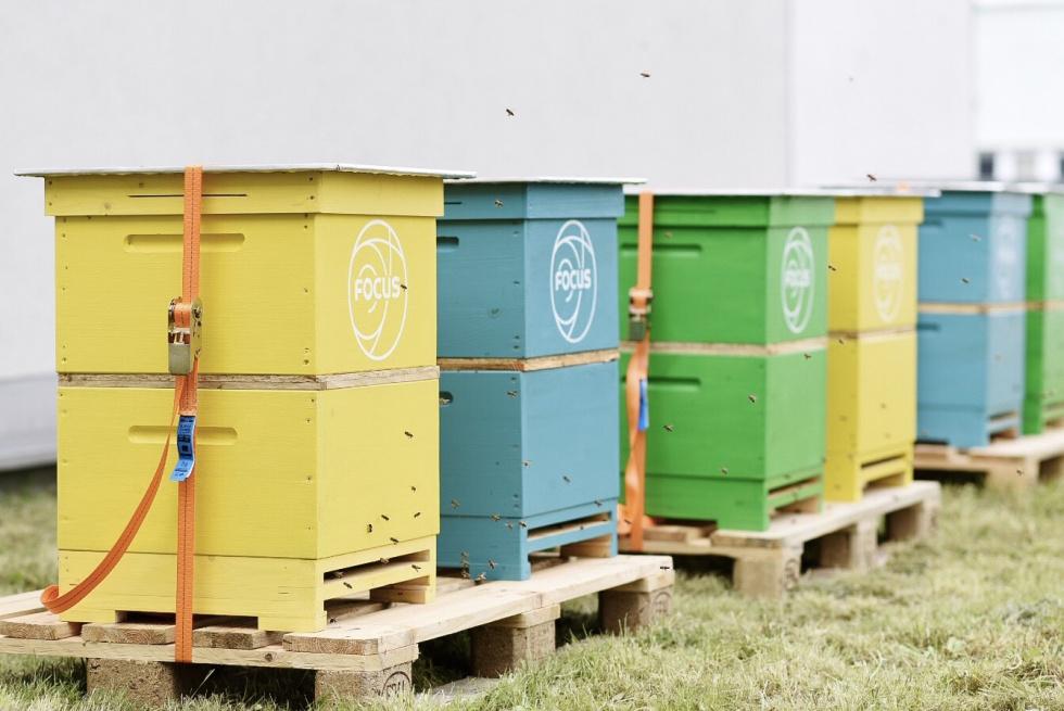 Pszczoły zamieszkały na dachu Centrum Handlowego Focus!