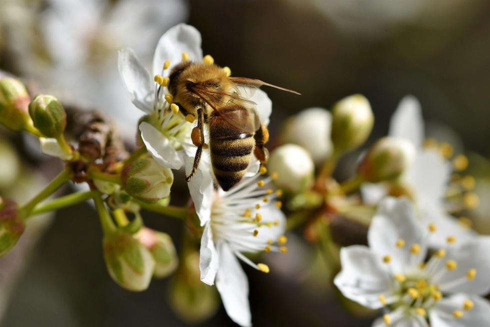 Ratusz apeluje, by nie niszczyć domków dla pszczół!