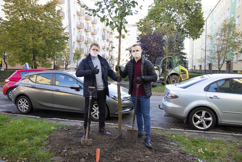 W Bydgoszczy posadzono 23 nowe drzewa przy ul. Lelewela [FOTO]