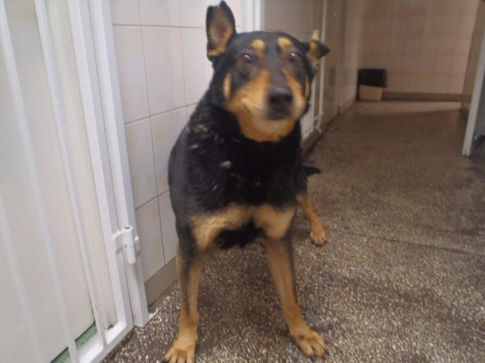 W Bydgoszczy znaleziono psa przywiązanego kablem do drzewa