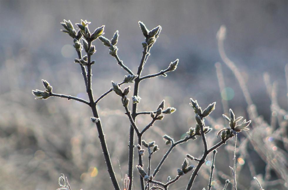 Wiosenne przymrozki w Bydgoszczy i okolicach [Ostrzeżenie meteorologiczne]…